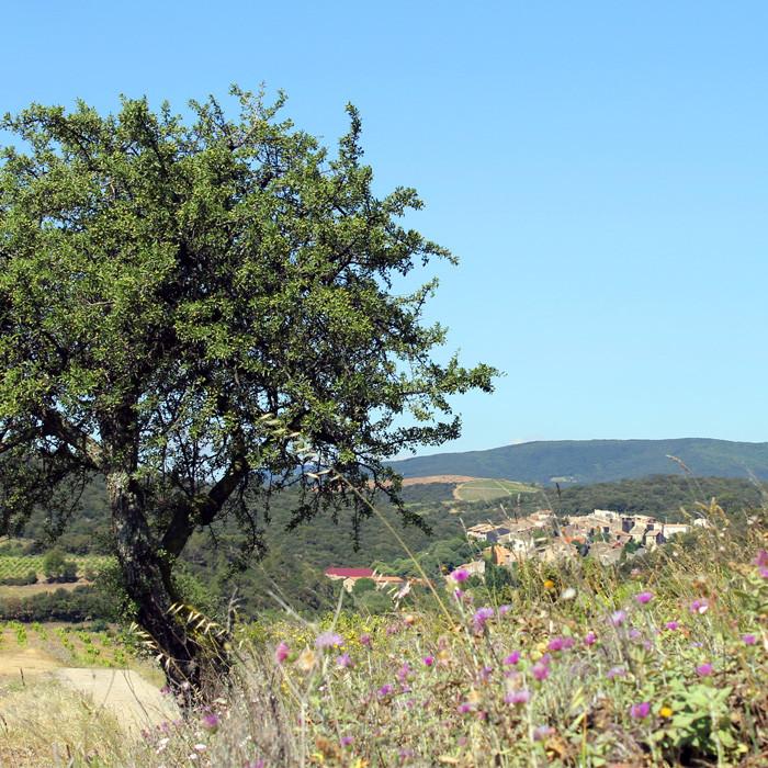 Faugères dans l'Hérault